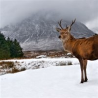 Highlands Christmas Cracker - North Yorkshire