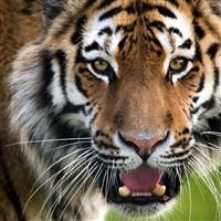 Yorkshire Wildlife Park Including Admission