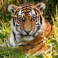 BD Blackpool / Blackpool Zoo