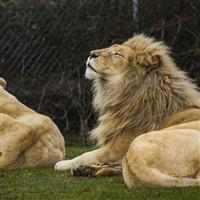 Legoland & West Midlands Safari Park